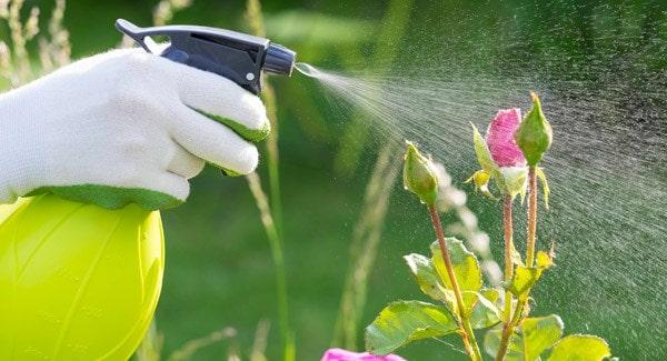 Protectia plantelor-Alvar.md-foto